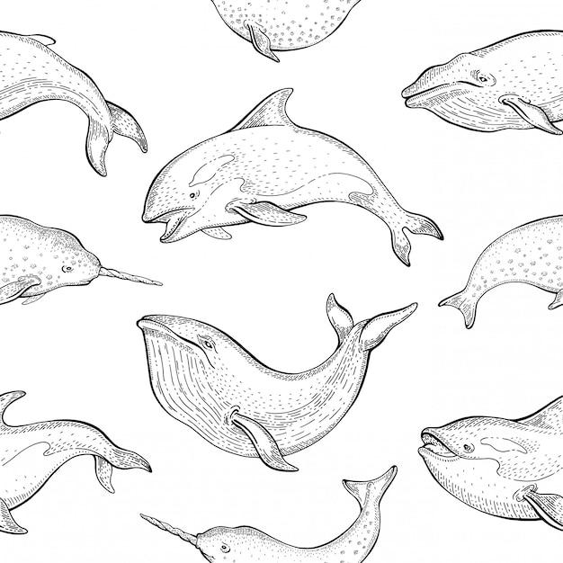 クジラのパターン。シロナガスクジラ、イッカク、シャチのシームレスな背景。かわいい海の動物のイラスト。漫画の海の海を描きます。 Premiumベクター