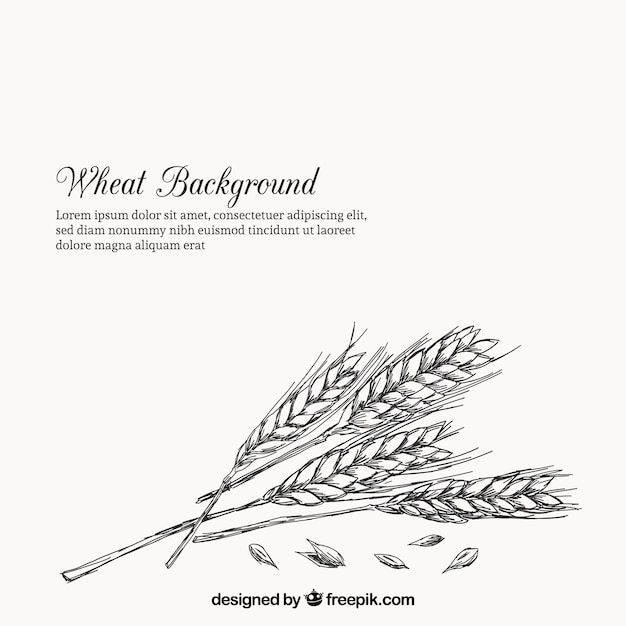 Wheat background in hand drawn style Free Vector