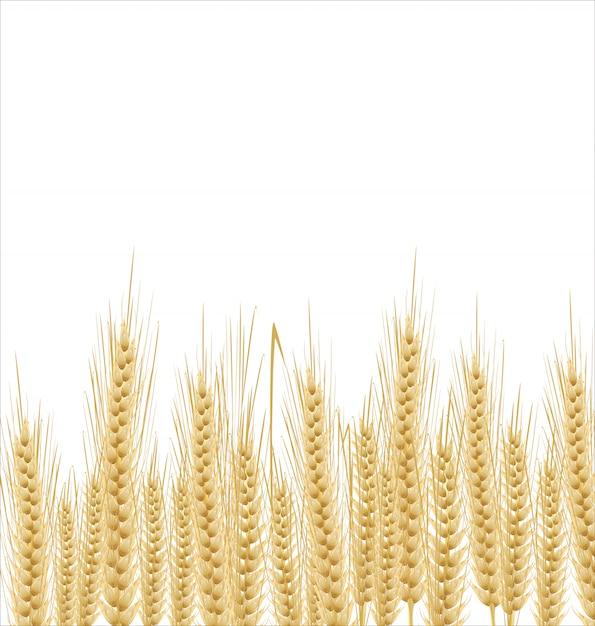 Wheat background Premium Vector