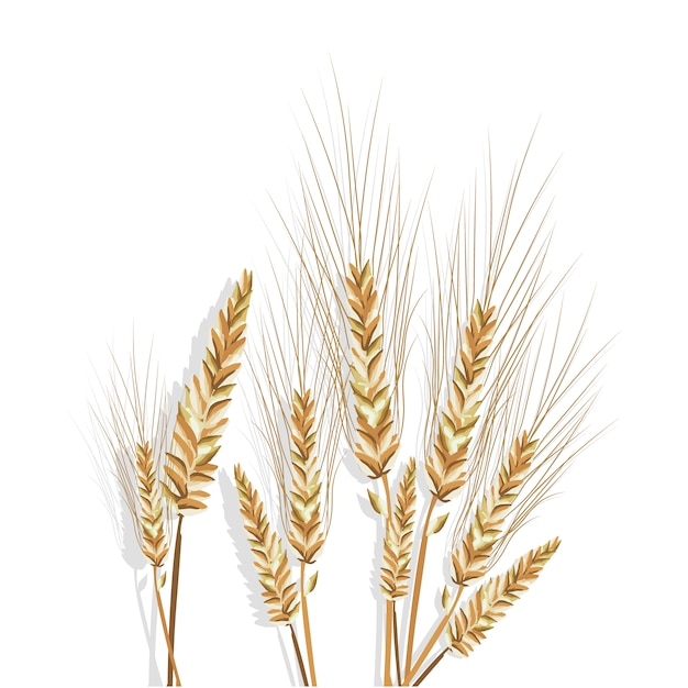 wheat branches design vector free download