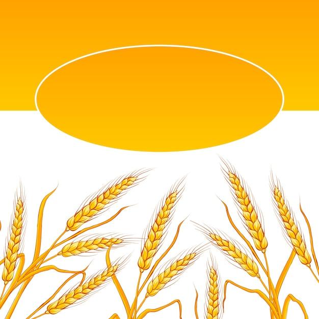 Пшеничная ушная карточка. Бесплатные векторы