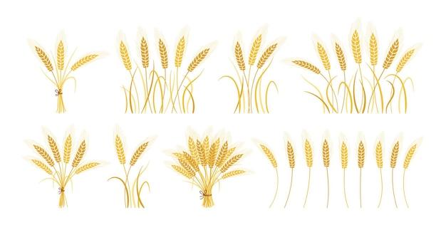 Мультяшный набор колосьев пшеницы золотой сноп, сбор спелых зерен, сельскохозяйственный символ производства муки Premium векторы