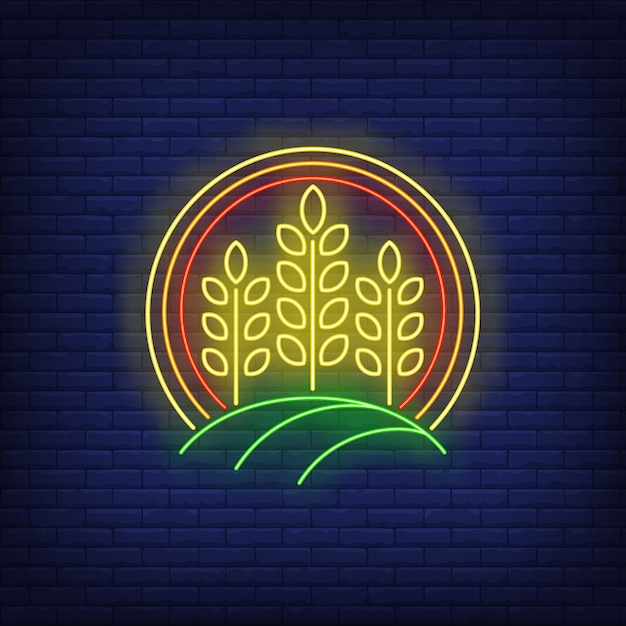 Wheat ears in circle neon sign. Free Vector