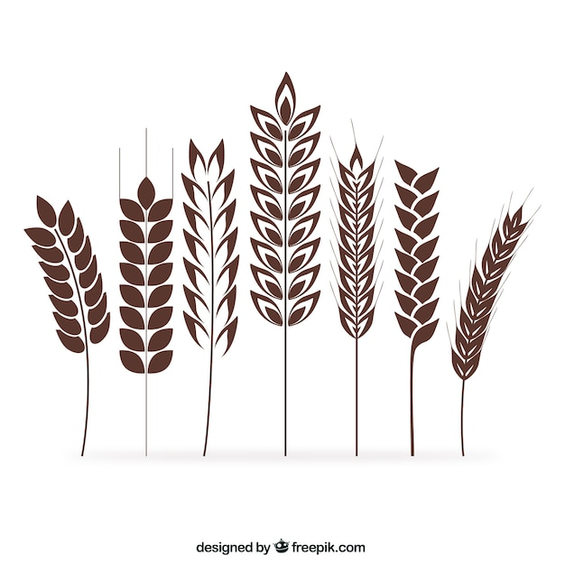 Wheat ears collection Free Vector
