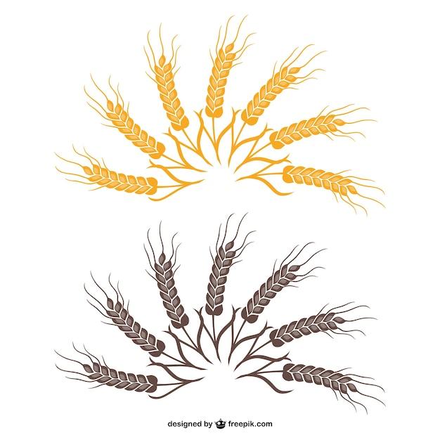 Wheat fan vector Vecto...