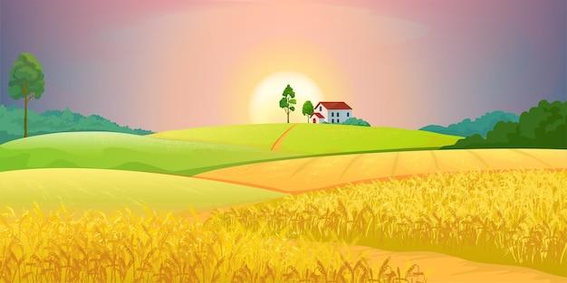 Иллюстрация полей пшеницы Premium векторы