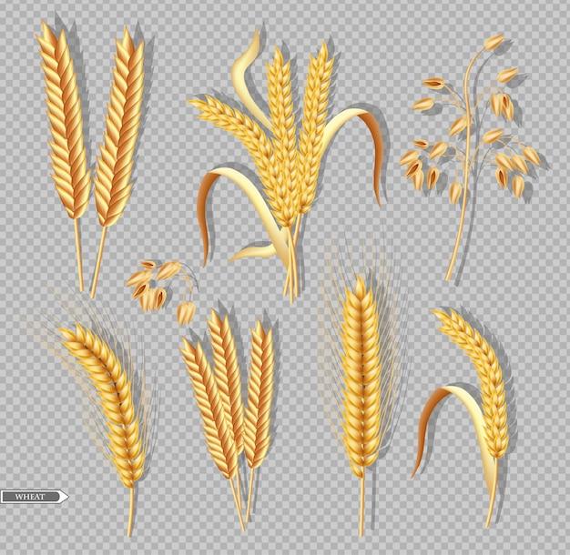 Wheat harvest collection Premium Vector