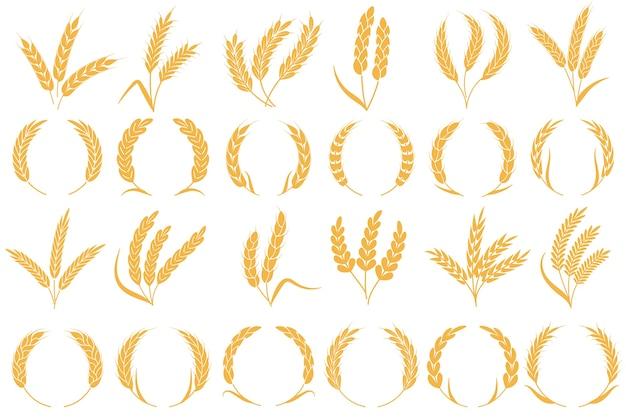 小麦または大麦の穂。黄金の穀物の収穫、茎の穀物の小麦、トウモロコシのオート麦ライムギ大麦有機小麦粉農業植物パンパターンとフレーム形状コレクション Premiumベクター
