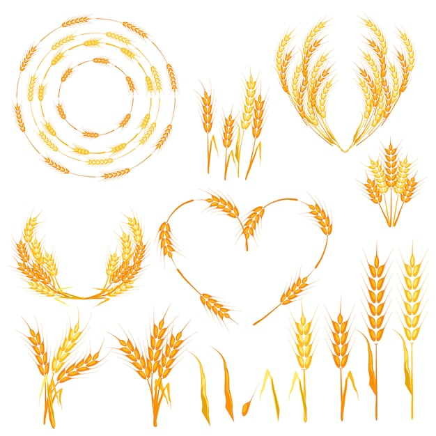 Wheat spikelets vector illustration. Premium Vector