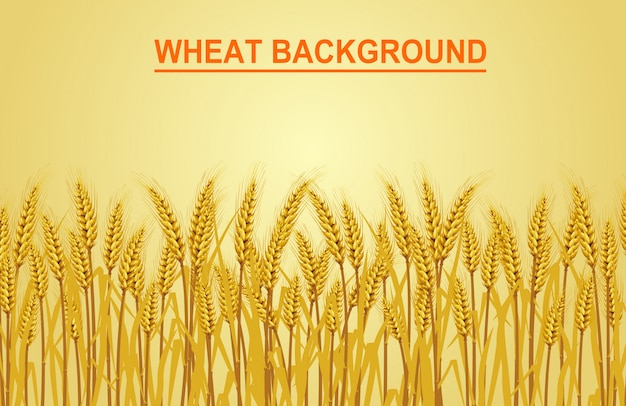 Wheat on the yellow background. vector Premium Vector