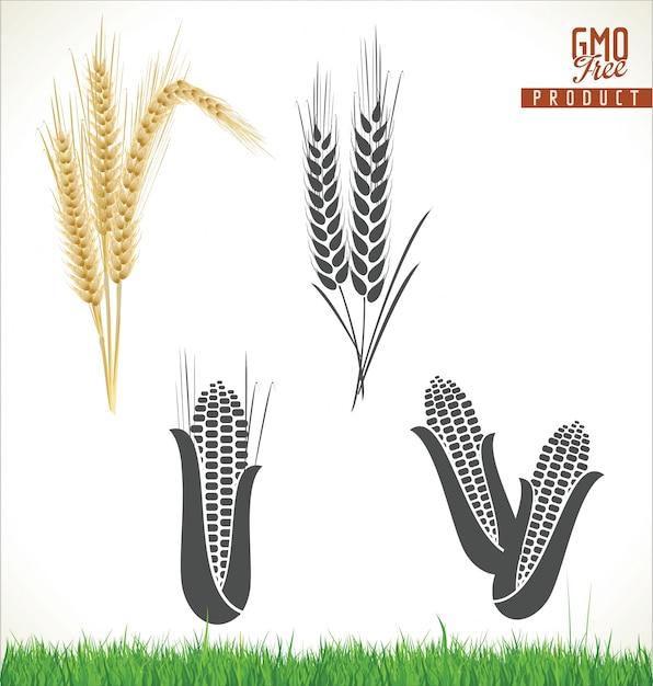 Wheat Premium Vector