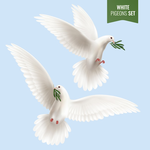White dove set with olive branch Free Vector