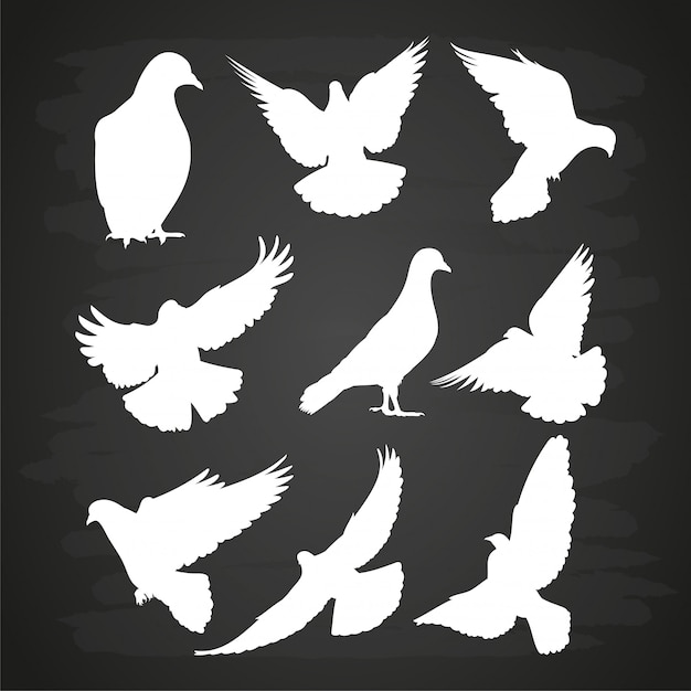 Premium Vector White Dove Silhouette Set On Blackboard This silhouette may be used royalty free with attribution for personal and educational purposes. https www freepik com profile preagreement getstarted 5853282