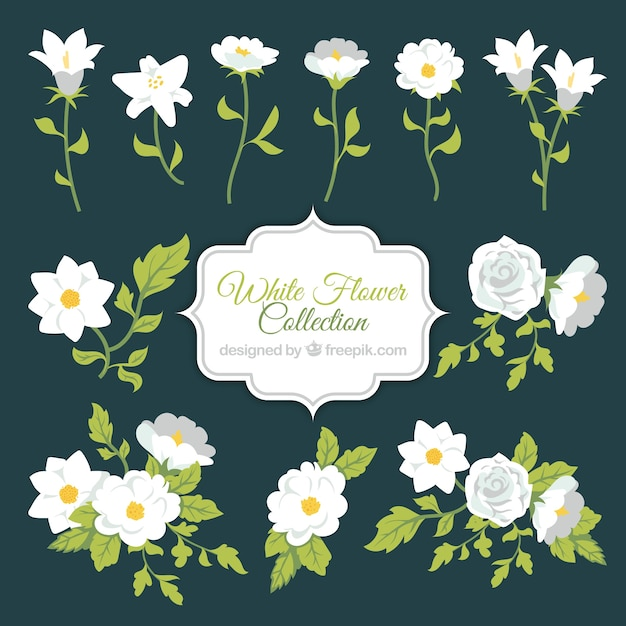 White Flower Collection Vector Free Download