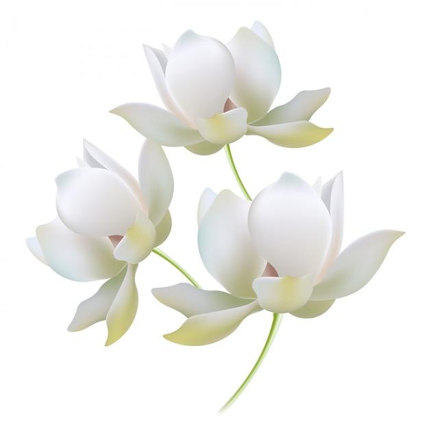 ホワイトゴールドユリは、芽の現実的なベクトル図を開きます。繊細な光る陰の花びら Premiumベクター