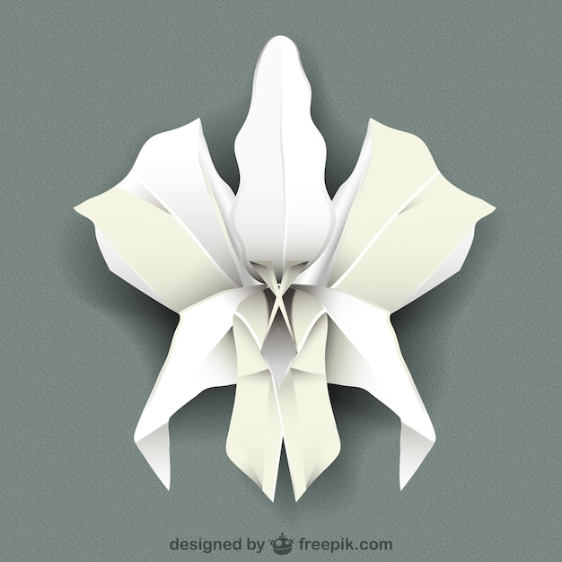 White orchid vector Vector | Free Download