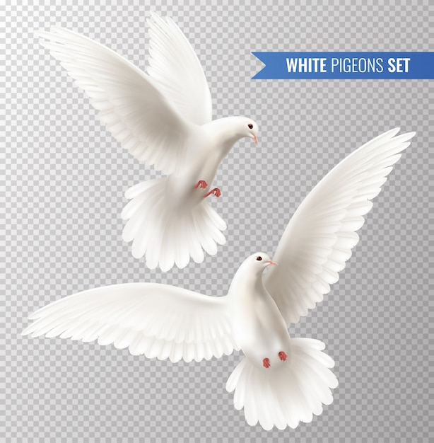 White pigeons set Free Vector