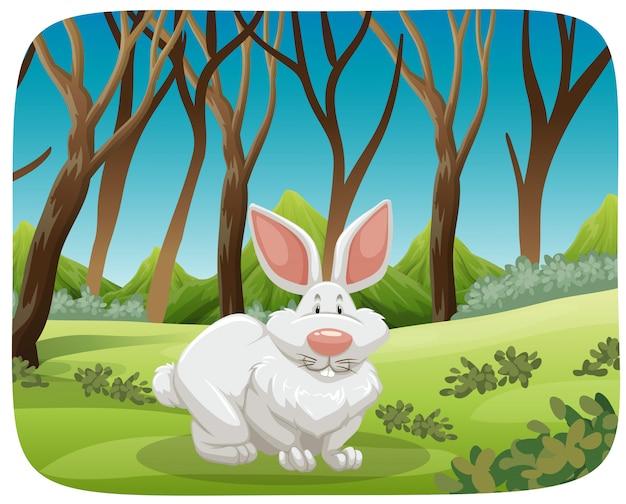 White rabbit in nature scene Free Vector