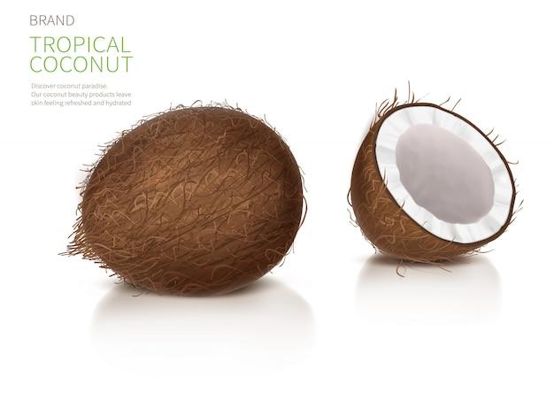 Whole and half broken coco nut Free Vector