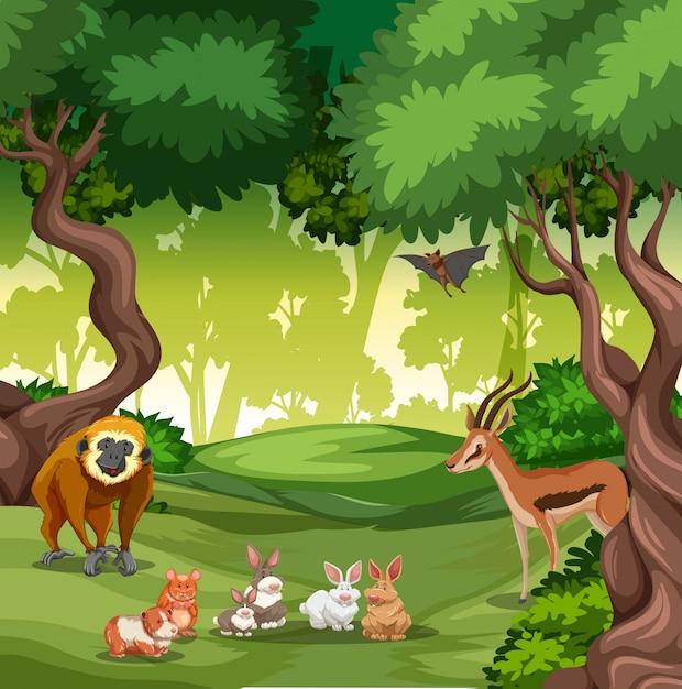 Wild animal in forest Premium Vector