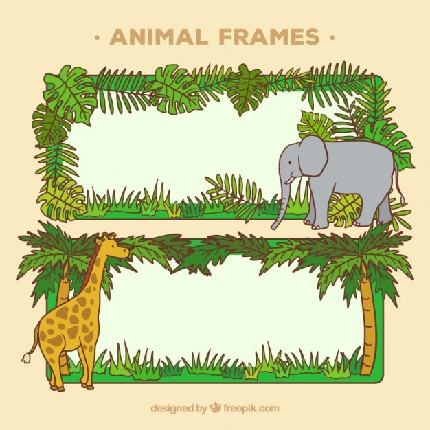 Wild animal frames design