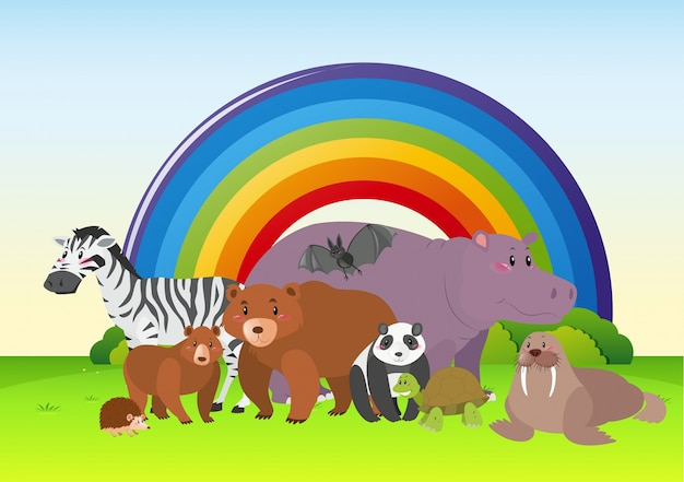 Wild animals in the field with rainbow in\ background