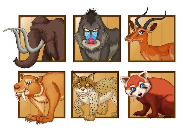 Wild animals on square frame\ illustration