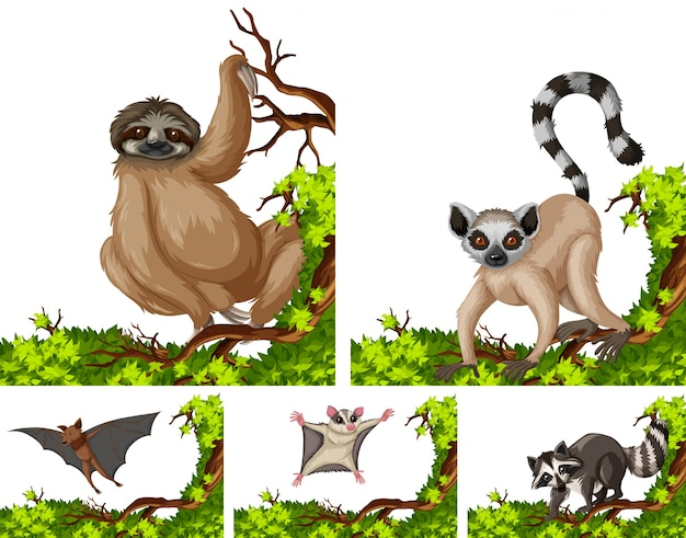 Wild animals on the branch illustration