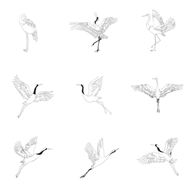 Wild birds in flight. animals in nature or in the sky. cranes or grus and stork or shadoof and ciconia with wings Premium Vector