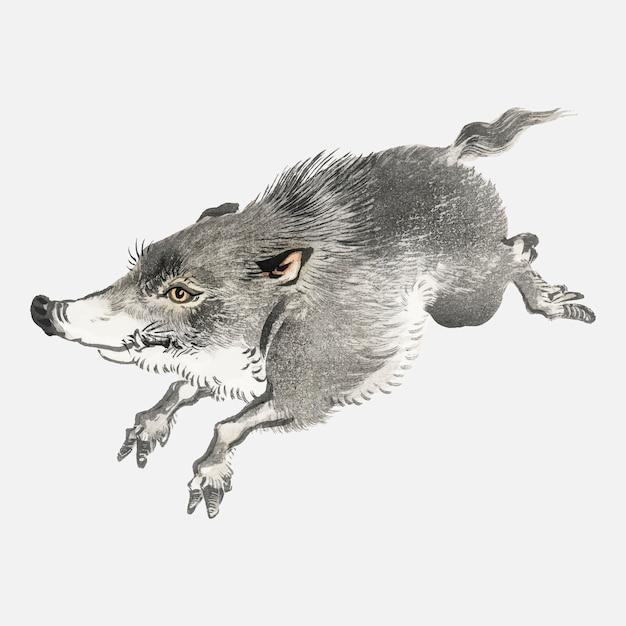 Wild boar Free Vector