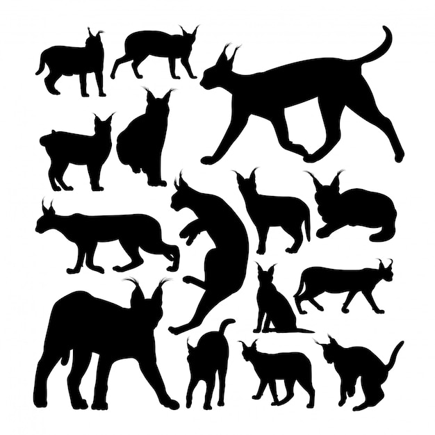 Wild caracal cat animal silhouettes Premium Vector