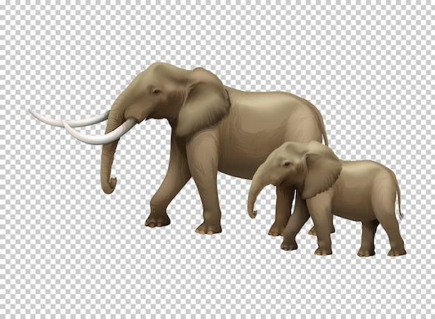 Wild elephants on transparent Free Vector