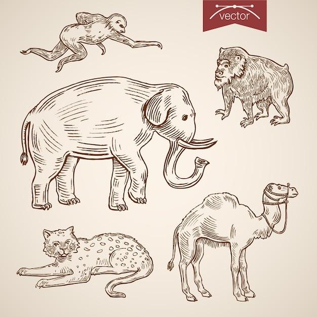 野生動物動物園にやさしい面白い動物のアイコンセット。 無料ベクター