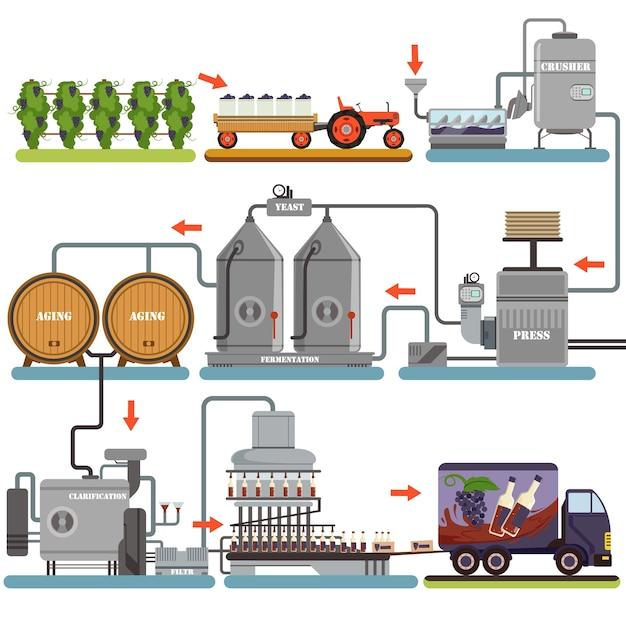 Процесс производства вина, производство напитков из винограда иллюстрации на белом фоне Premium векторы
