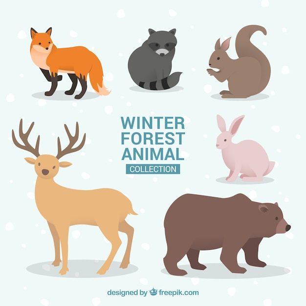 Winter animal collection in flat design