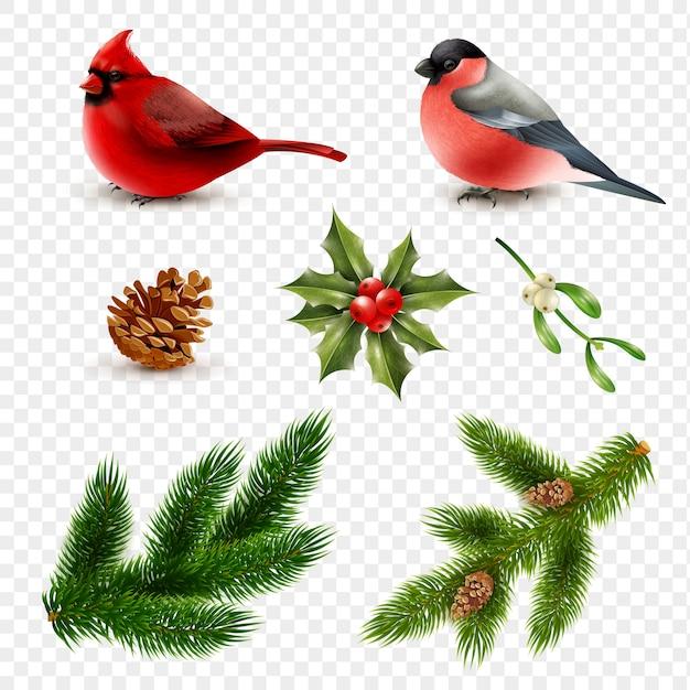 Winter birds fir branches set Free Vector