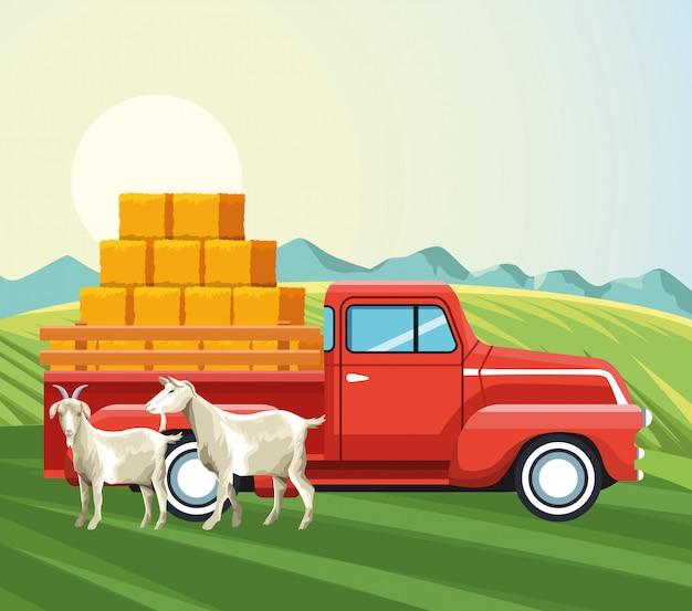 干し草のwithとヤギとピックアップトラックの農業 Premiumベクター