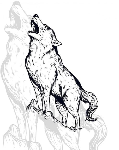Wolf vector illustration Premium Vector