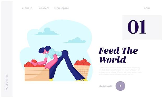 Женщина-фермер собирает урожай яблок в корзину и кладет в ящик в саду. персонаж-садовник, собирающий фрукты в саду, фермерское производство, целевая страница веб-сайта, веб-страница. Premium векторы