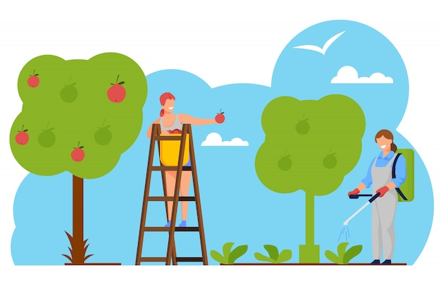 Woman farmer pick apples to basket in orchard Premium Vector