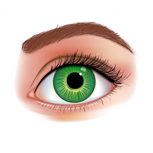 女性の目のリアルなイラスト Premiumベクター