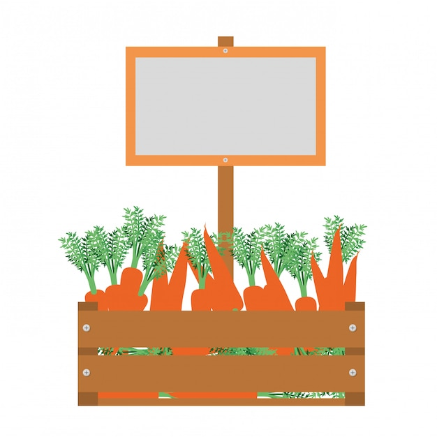 Wooden box with carrots isolated icon Premium Vector