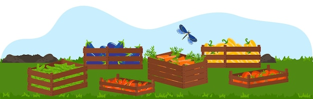 Деревянная коробка с экологической едой, фруктами и овощами, иллюстрация урожая. Premium векторы