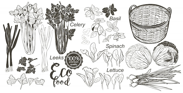 Wooden crate full of fresh vegetables and herbs Premium Vector