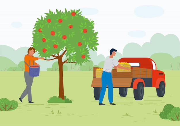 Workers in orchard, ripe apples, transport vector Premium Vector