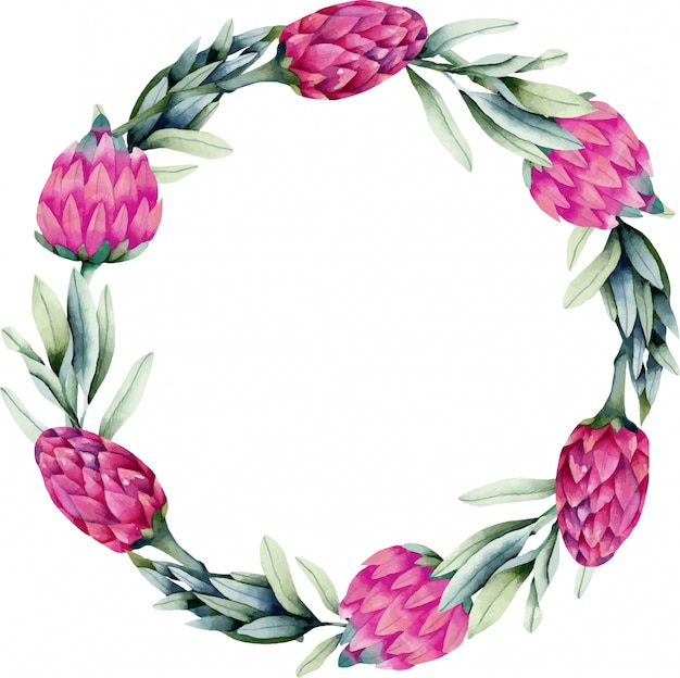 Wreath with watercolor pink protea flower and green branches Premium Vector