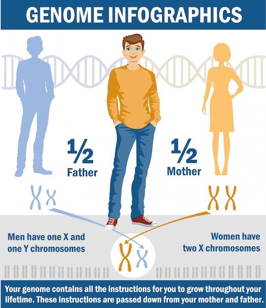 ヒトにおける性決定xおよびy染色体 Premiumベクター