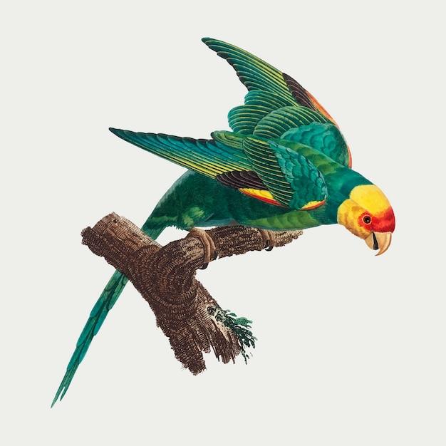 Yellow crowned parakeet Free Vector