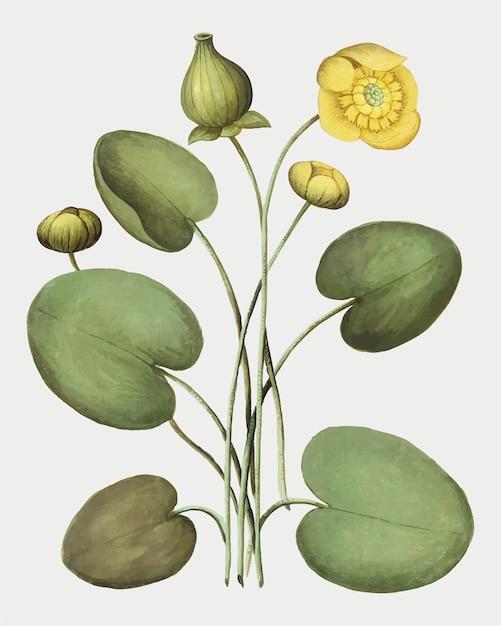 Желтый цветок дискеты Бесплатные векторы