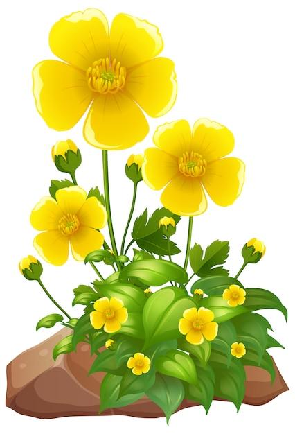 Желтые цветы и камни на белом фоне Premium векторы